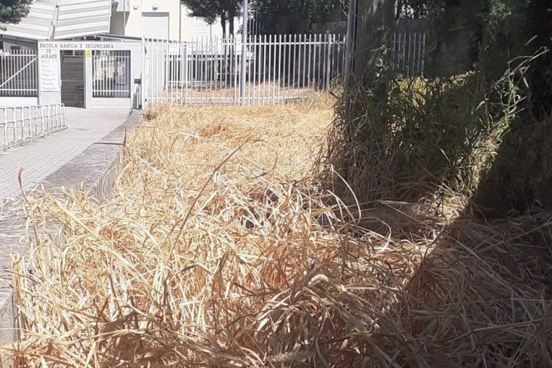 PSD Felgueiras contra a utilização de herbicidas nas escolas.