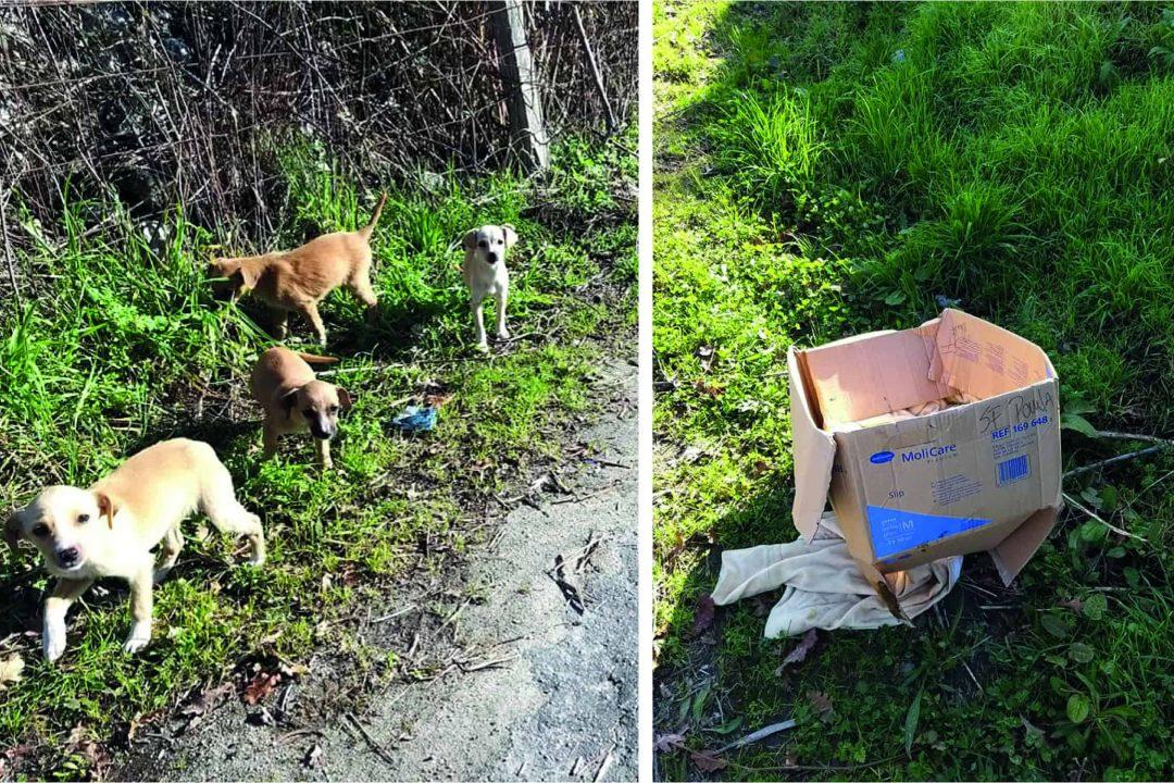 cães abandonados em Airães